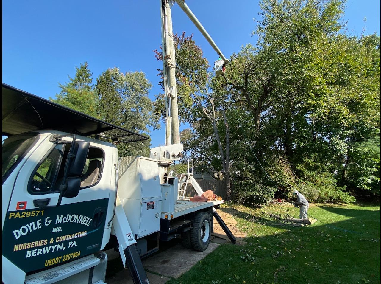 Doyle & McDonnell - Arboricultural Work Fall 2020
